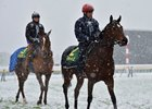 Snow, Rain in Lead Up to Japan Cup