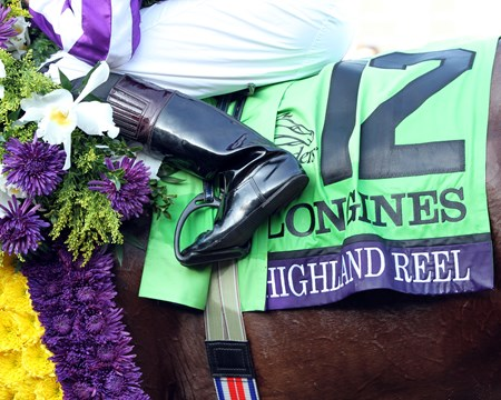 Highland Reel after winning the Breeders' Cup Turf (GI) at Santa Anita on November 5, 2016.