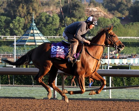 Undrafted on the track at Santa Anita on November 2, 2016.