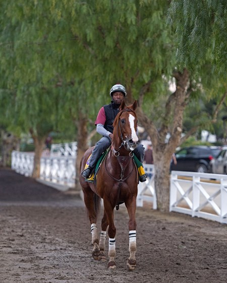 California Chrome with Dihigi Gladney Works at Santa Anita in preparation for 2016 Breeders' Cup on Nov. 1, 2016, in Arcadia, CA.