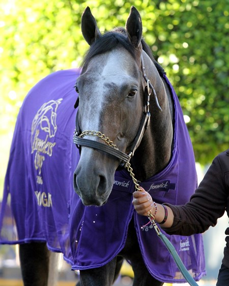 Arrogate at Santa Anita on November 2, 2016.