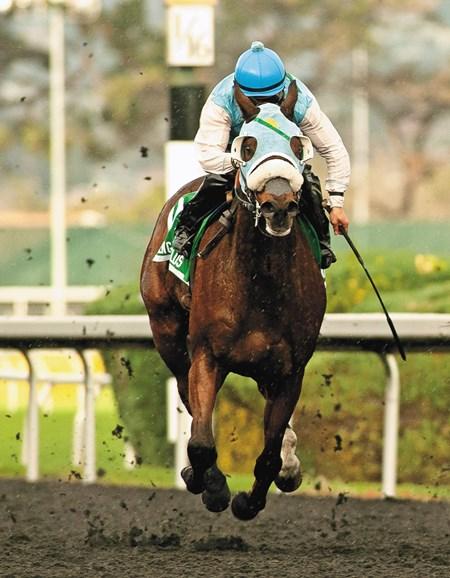 Stryker PHD with jockey Leslie Mawing win the Berkeley Handicap (Grade III) $100,000 Guaranteed with a time of 1:43.67 at  Golden Gate, November 26, 2016. Trained by Larry D. Ross.