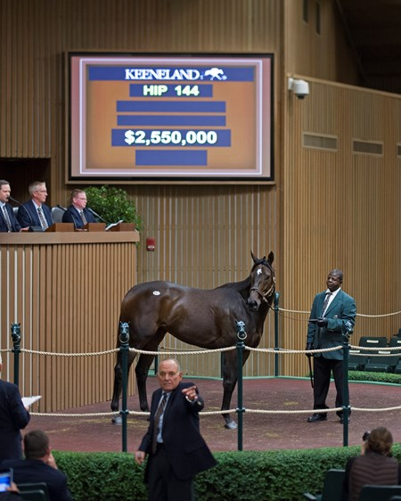 Hip 144 Celestine from Taylor Made brings $2.55 million from Fiona Craig for Moyglare Keeneland November Sales on Nov. 8, 2016, in Lexington, Ky.