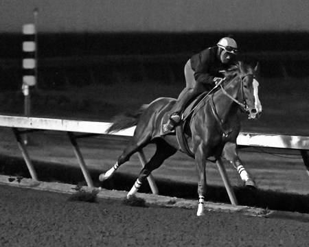 California Chrome - Los Alamitos, November 26, 2016