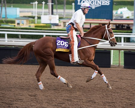 I'm a Chatterbox Works at Santa Anita in preparation for 2016 Breeders' Cup on Nov. 1, 2016, in Arcadia, CA.