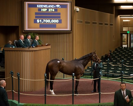 Paola Queen was sold to SF Bloodstock for $1.7 million