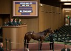 SF Bloodstock purchased Paola Queen for $1.7 million at last year's Keeneland November breeding stock sale