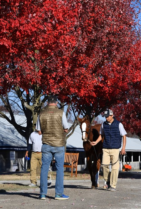 Vanning. Horses leaving another Keeneland November sales.