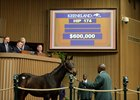 Hip 174, a Pioneerof the Nile colt sells for $600,000