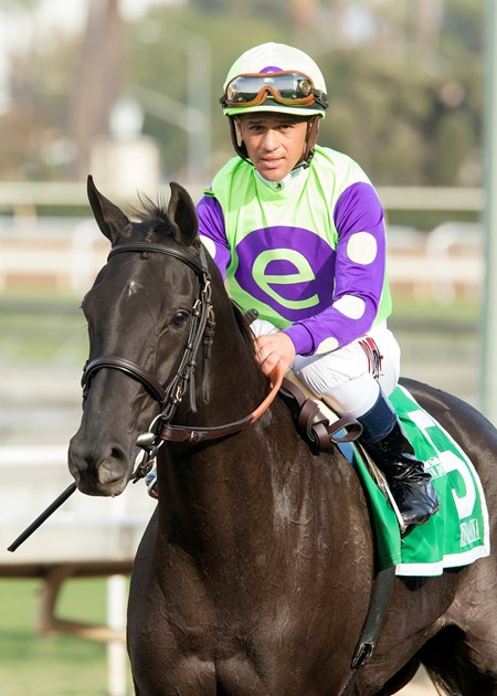 Jockey Javier Castellano guiddes Zindaya to the winner's circle after their victory in the Grade II, $200,000 Goldikova Stakes, Sunday, November 6, 2016 at Santa Anita Park, Arcadia CA.