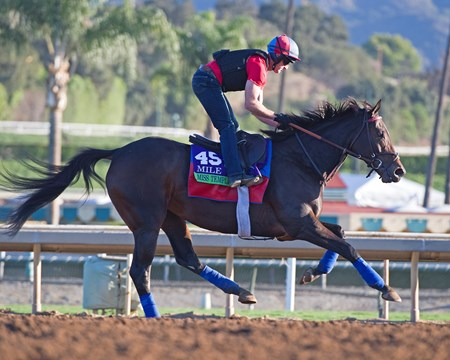 Miss Temple City Morning scenes at Santa Anita in preparation for 2016 Breeders' Cup on Nov. 3, 2016, in Arcadia, CA.
