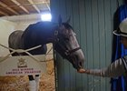 Arrogate gets carrots from exercise rider Dana Barnes a day after he won the Breeders' Cup Classic