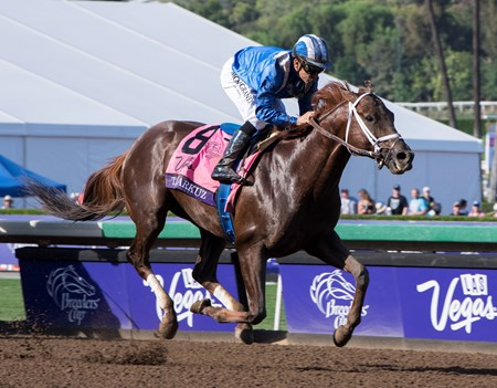 Tamarkuz, with Mike Smith up, wins the Las Vegas Dirt Mile at Santa Anita on Nov. 4, 2016, in Arcadia, California.
