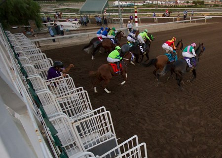 The field leaving the starting gate in the Breeder's Cup Classic at Santa Anita on 11/5/16.