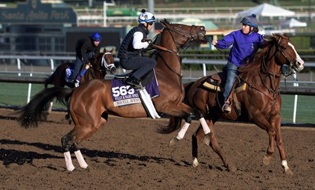 Wavell Avenue is fractious while out for a gallop at Santa Anita Nov. 2, 2016 in preparation for her appearance in the Breeders' Cup in Arcadia, California.