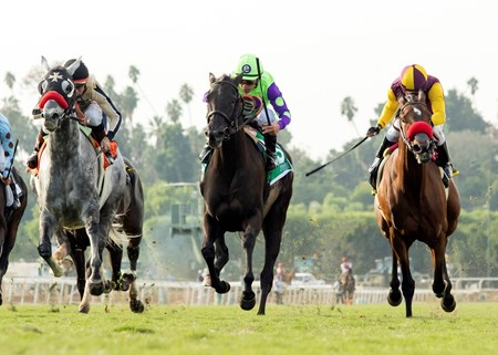 Zindaya and jockey Javier Castellano, middle, outleg Tiz a Kiss (Kent Desormeaux), left, and Hillhouse High (Santiago Gonzalez), right, to win the Grade II, $200,000 Goldikova Stakes, Sunday, November 6, 2016 at Santa Anita Park, Arcadia CA.