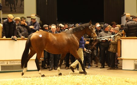 Lot 1541 The Miniver Rose (IRE) B.M. by High Chaparral (IRE) x Bloemfontain (IRE) 550,000