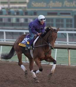 Beholder gallops at Santa Anita Nov. 2, 2016 in preparation for her appearance in the Breeders' Cup in Arcadia, California.