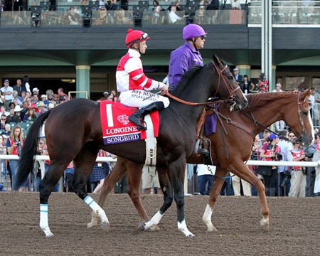 Songbird with Mike Smith in the post parade prior to finishing second in the Breeders' Cup Distaff (GI) at Santa Anita on November 4, 2016.