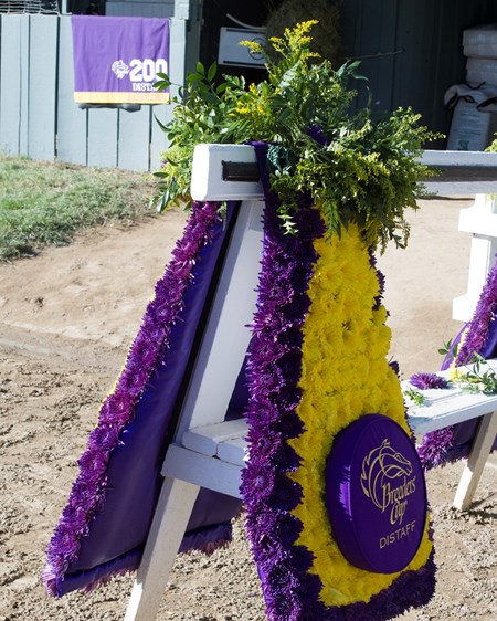 Beholder at barn day after the 2016 Breeders' Cup Distaff