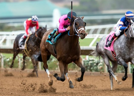 Solid Wager and jockey Victor Espinoza win the $100,000 Cary Grant Stakes, Sunday, November 20, 2016 at Del Mar Thoroughbred Club, Del Mar CA.