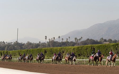 The field approaching the starting gate in the Breeders' Cup Filly & Mare Sprint at Santa Anita on 11/5/16