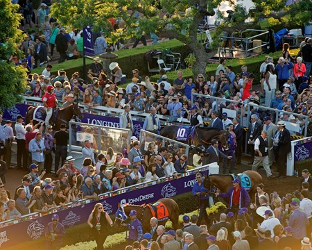 Arrogate Paddock scenes before the Classic (gr. I) at Santa Anita on Nov. 5, 2016, in Arcadia, California.
