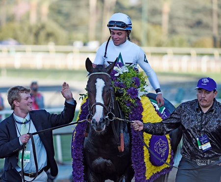 Tourist after his Breeders' Cup Mile (gr. I)