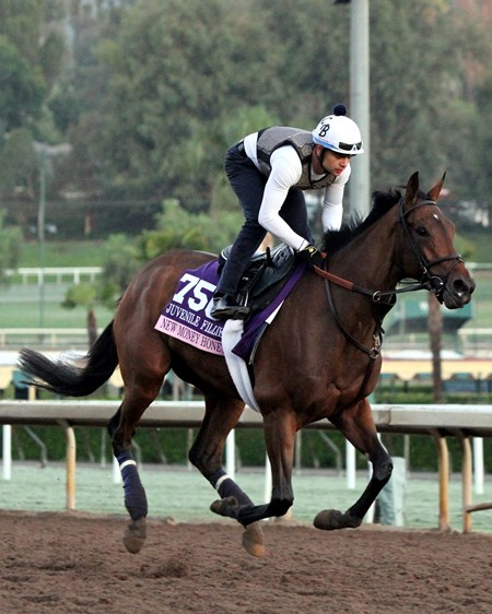 New Money Honey on the track at Santa Anita on November 2, 2016.