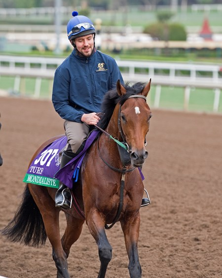 Mondialiste with Feargal Davis Works at Santa Anita in preparation for 2016 Breeders' Cup on Nov. 1, 2016, in Arcadia, CA.