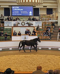 Eblouissante in the ring Nov. 29 at Tattersalls December mares sale