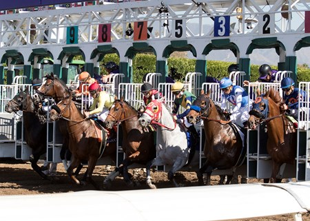 The field leaving the starting gate in the TwinSpires Breeders' Cup Sprint at Santa Anita on 11/5/16.