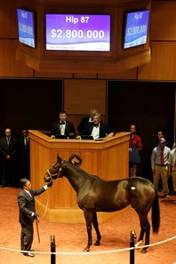 2016 Fasig-Tipton November Sale hip 87