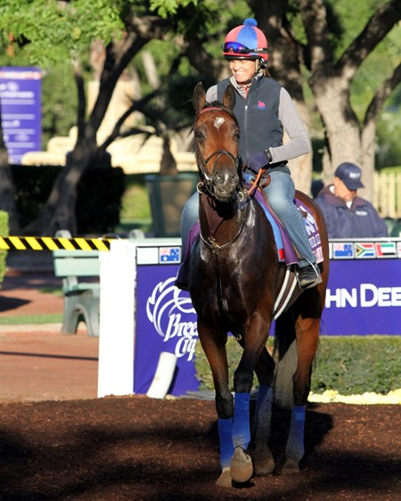 Dancing Rags in the paddock at Santa Anita on November 2, 2016.