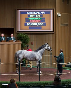 Unrivaled Belle, lit up Keeneland bid board.