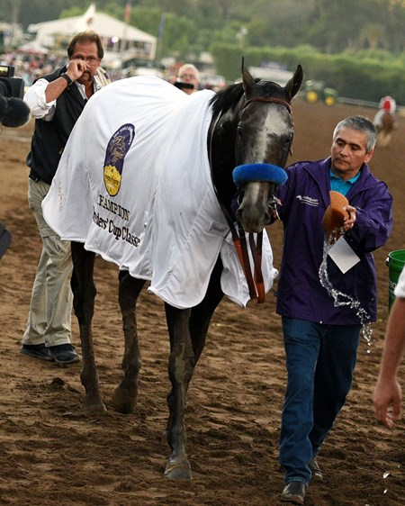 Arrogate returns from the winner's circle after the 2016 Breeders' Cup Classic