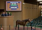 Hip 590, Sea Island, from Claiborne brings $480,000 from Elliott Walden of WinStar Farm