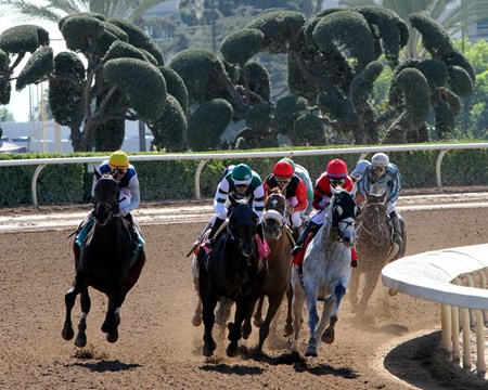 The field for the Marathon Stakes (GII) on the turn won by Scuba (#1) with Kendrick Carmouche at Santa Anita on November 4, 2016.