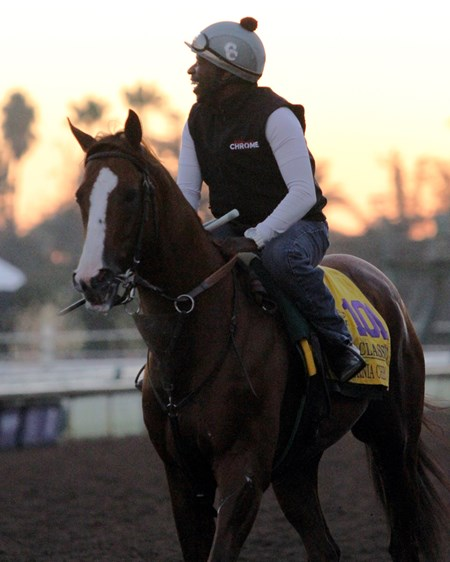 California Chrome on the track at Santa Anita on November 2, 2016.