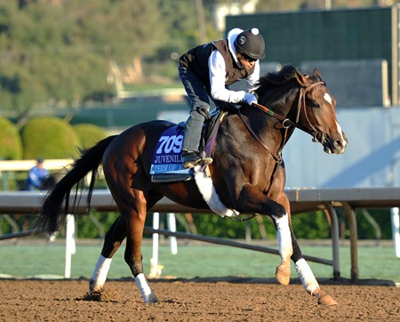 Term of Art at Santa Anita