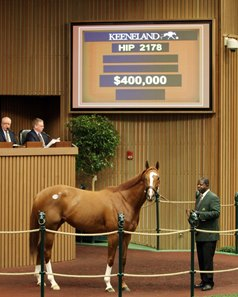 Hip 2178, Tim McMurry, 2016 Keeneland November Sale