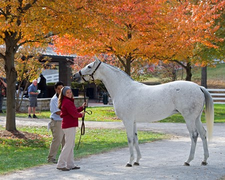 Scene with mare Hip 2601 Pink Pallet, in foal to Point of Entry Beau Lane with J.B. and Michael Orem at the Beau Lane consignment plus sales scenes. Keeneland November Sales on Nov. 15, 2016, in Lexington, Ky.