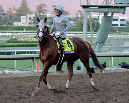 California Chrome with Victor Espinoza return after finishing second in the Breeders' Cup Classic (GI) at Santa Anita on November 5, 2016.