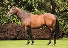 Fastnet Rock is one of the leading Southern Hemisphere Sires descended from Danzig