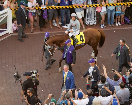California Chrome Paddock scenes before the Classic (gr. I) at Santa Anita on Nov. 5, 2016, in Arcadia, California.