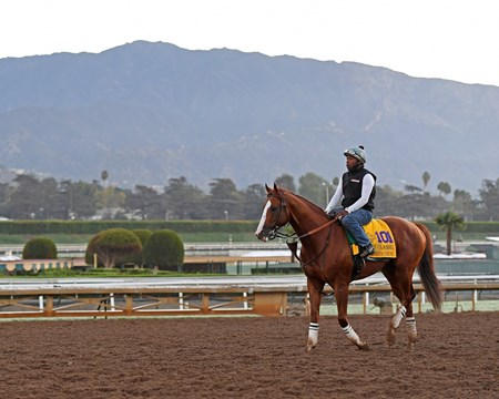California Chrome Morning scenes at Santa Anita in preparation for 2016 Breeders' Cup on Nov. 2, 2016, in Arcadia, CA.