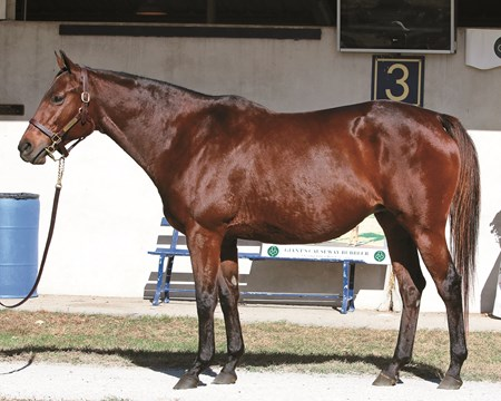 2016 Fasig-Tipton November Sale Hip 110