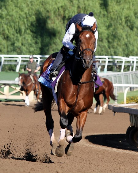 Practical Joke on the track at Santa Anita on November 2, 2016.