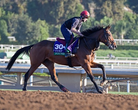 Found Morning scenes at Santa Anita in preparation for 2016 Breeders' Cup on Nov. 3, 2016, in Arcadia, CA.