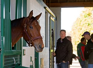 Beholder arrives at Spendthrift Farm in Lexington, Ky., on Nov. 21, 2016.